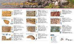 FRENCH-Mining Matters Fossils of Ontario-high rez_Page_1