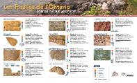 Mining Matters Fossils of Ontario Guide page 1 French