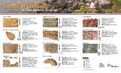 Mining Matters Fossils of Ontario-HighRez_Page_1
