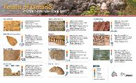 Mining Matters Fossils of Ontario Guide page 1 English
